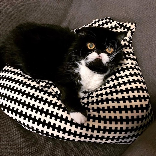 Famous Instagram Kitty Leads 'Cats Against Domestic Violence' Campaign
