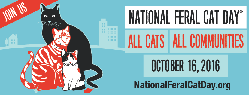 National Feral Cat Day: Sunday, October 16, Is the 16th Anniversary