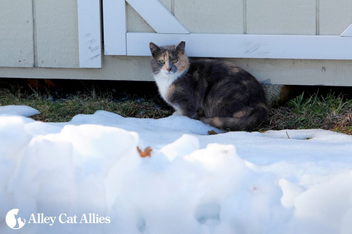 8 Tips for Helping Community (Outdoor) Cats in the Winter
