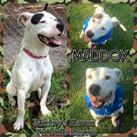 maddox-collage