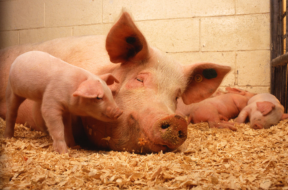 Voters Choose Compassion – Animal Protection Law Passed