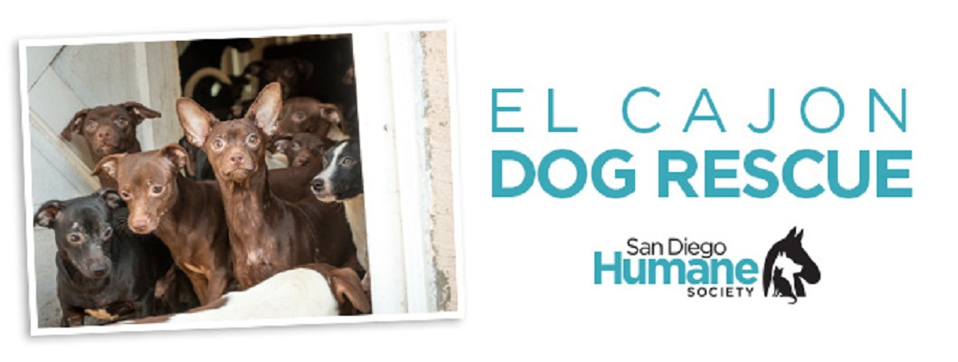 San Diego Humane Society Takes In 78 Dogs From Hoarding