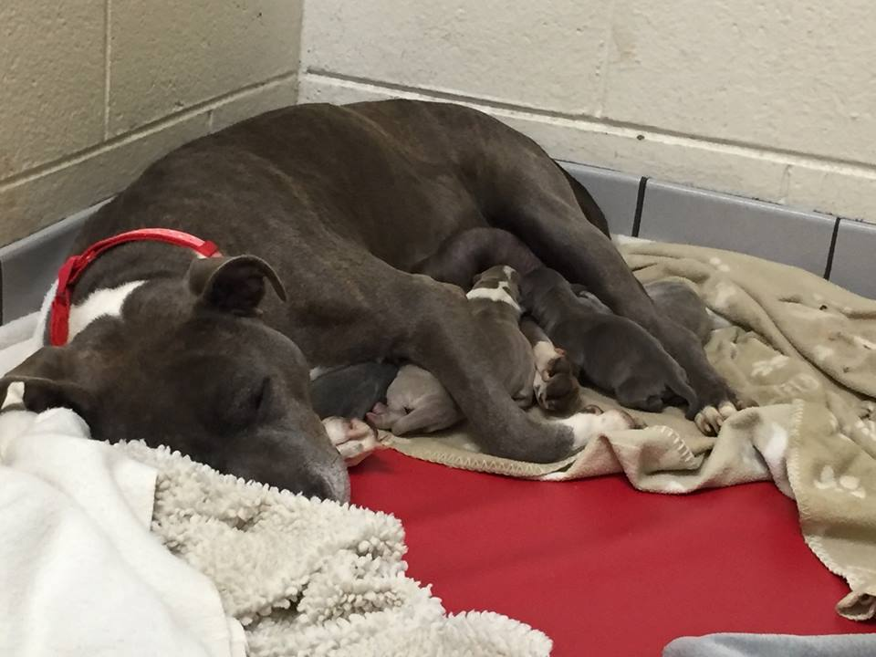 Two Days After Amazing Dumpster Rescue, She Gives Birth To Seven Pups