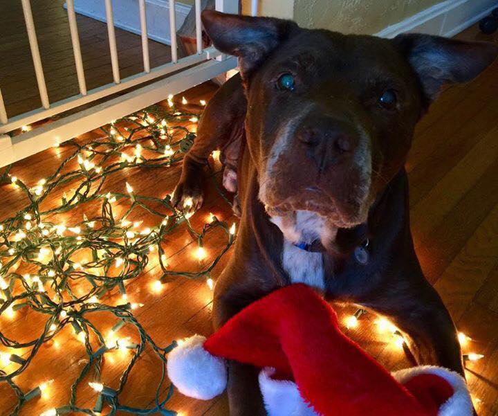 Florida Rescues Wish For Filled Stockings And Fantastic Furever Homes