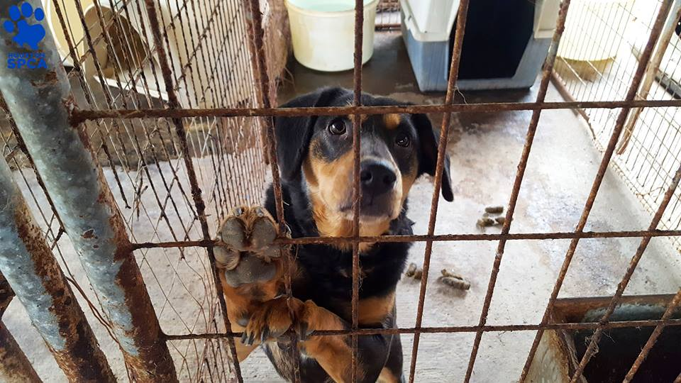 Shelter Takes In Over 150 Animals From Neglectful Rescue Agency