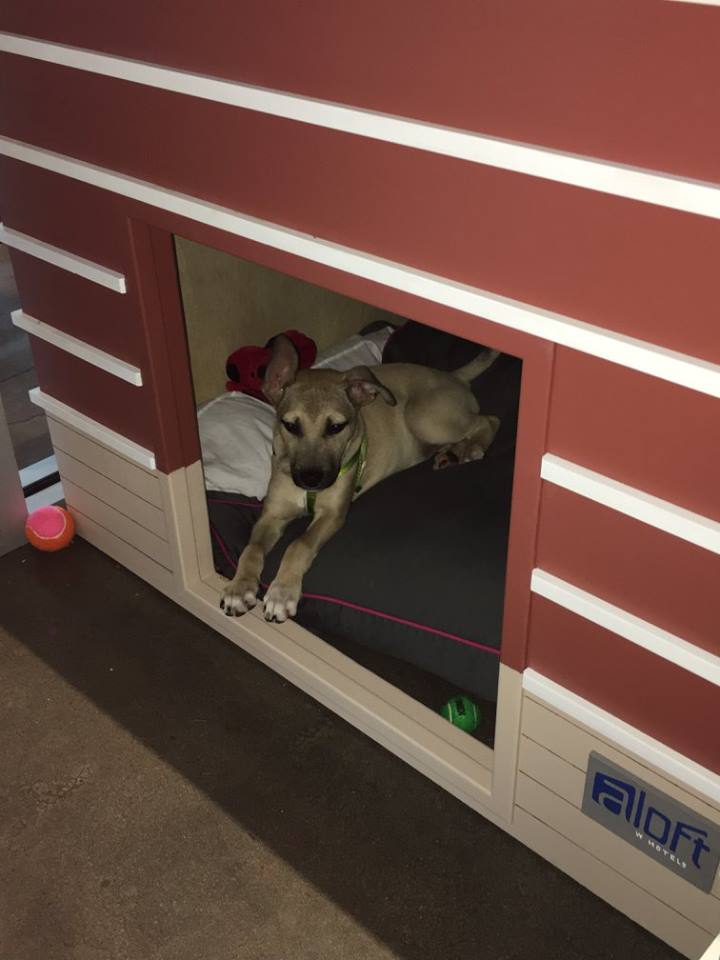 Awesome Hotel Is Fostering Homeless Dogs For Local Shelter