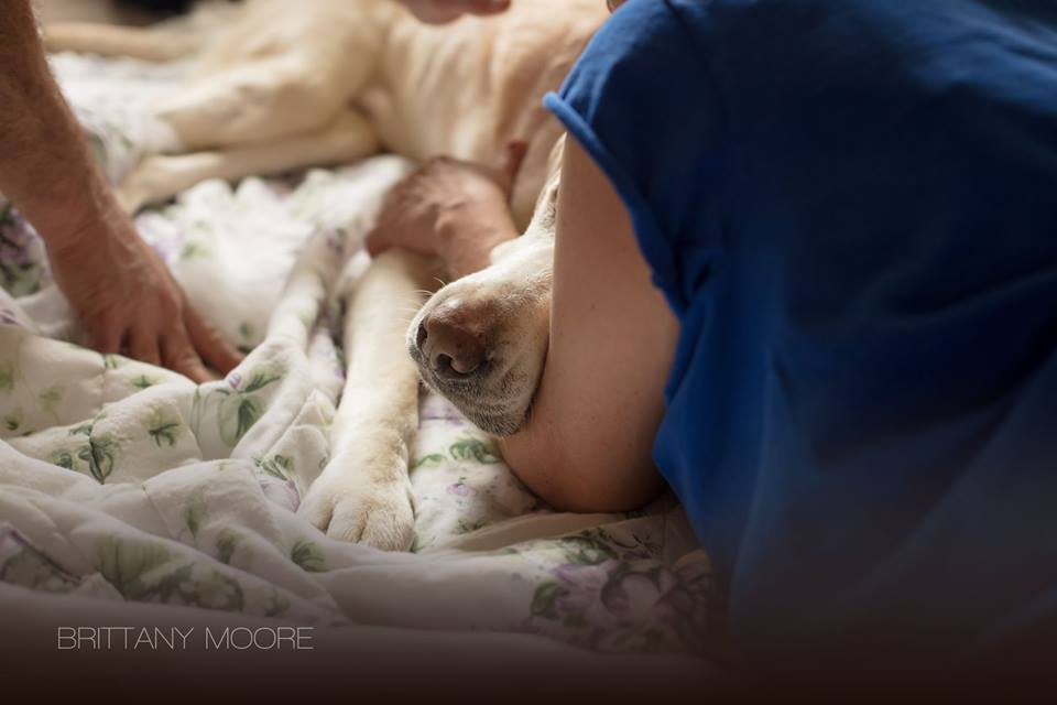 Photographer Captures Beautiful Moments Of Beloved Family Dog's Final Day