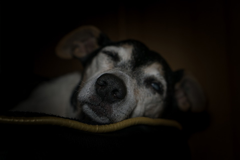 Monkey's House: A Place For Terminally Ill Senior Dogs To Be Loved