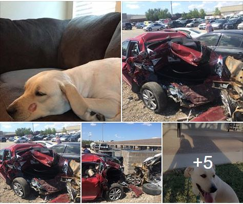 Rescue agency helps find dog missing after accident