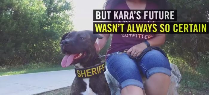 From The Shelter To The Community – Kara Is Colorado's First Pit Bull K-9 Unit