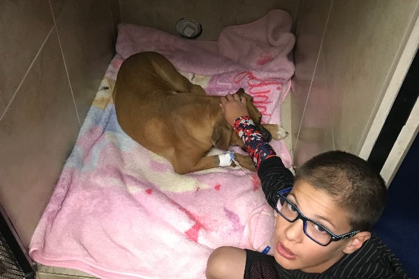 Heroic dog saved boy from snake