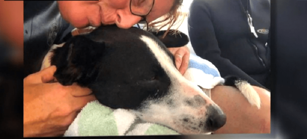 Dog rescued in the Caribbean