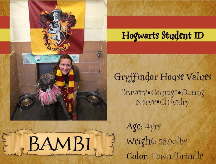 Florida Animal Shelter Ditches Breed Labels, Opting For Hogwarts Sorting Instead