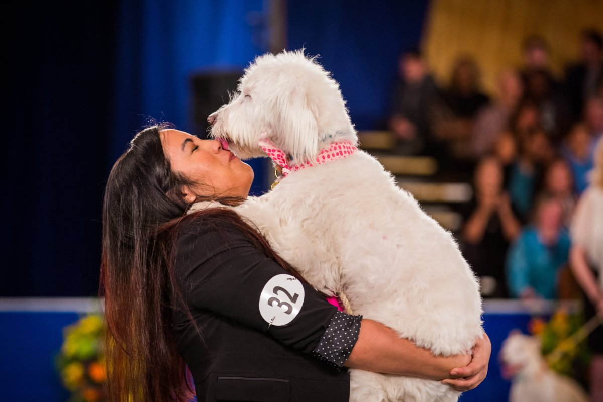 Get Ready! First Ever 'Rescue Dog Show' Airs On The Hallmark Channel This Monday
