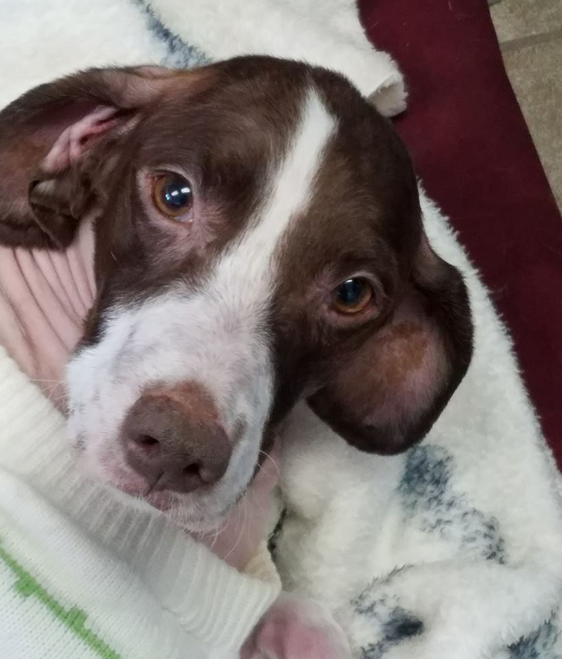 Ailing Dog, Discovered Alone In The Desert, Just Found Her Forever Home