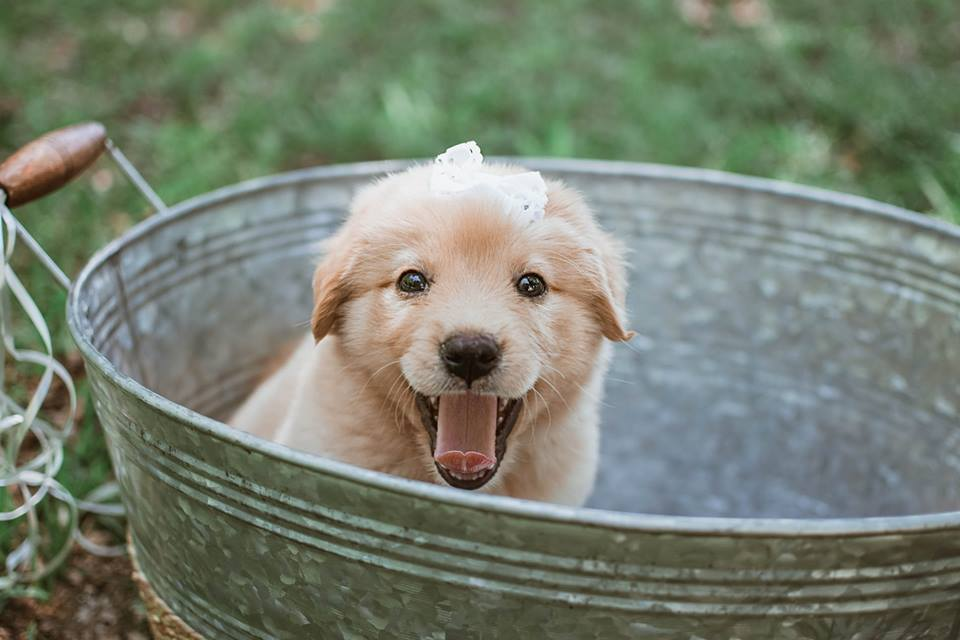 Photographer Captures Rescue Puppy's Big Reveal In Adorable Photo Session
