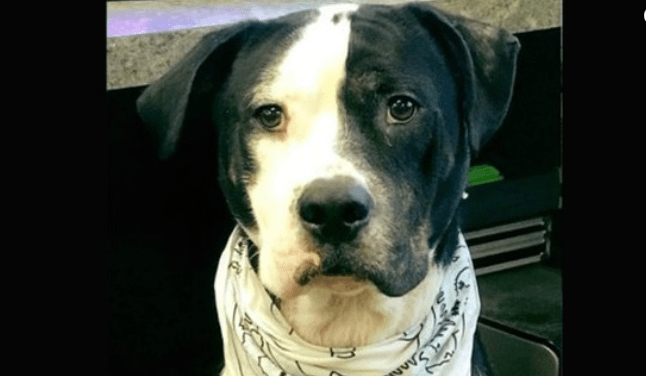 Community Rallies For Lone Dog Left At Shelter Following Adoption Event