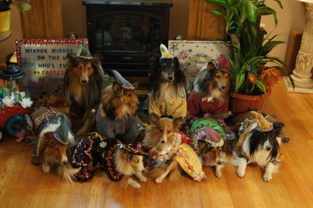 Sheltie Nation Oh Boy Here We Go