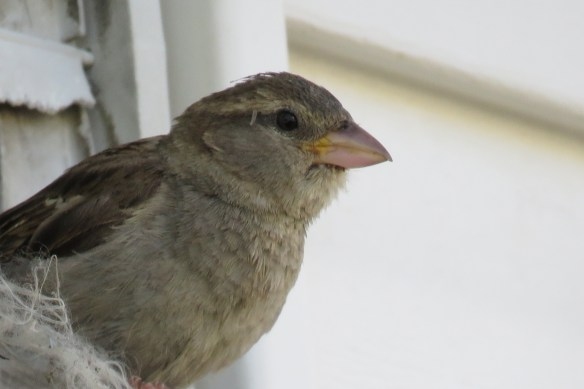 Kath's Canon July 2 2015 Rumble Hood Birds 103