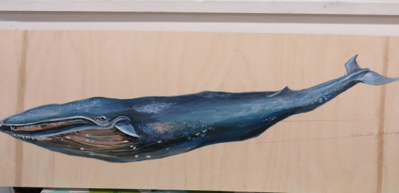 kaths-canon-september-30-2015-rumble-blue-whale-blue-jay-046
