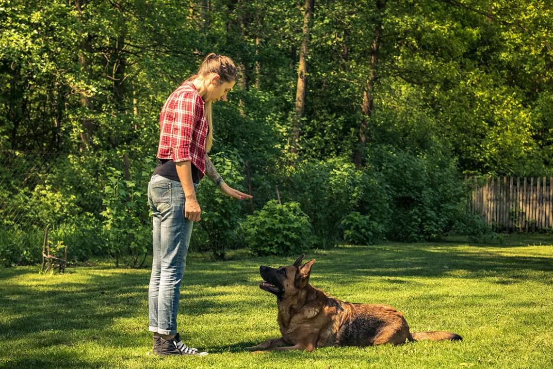 German Shepherd Temperament Obedient