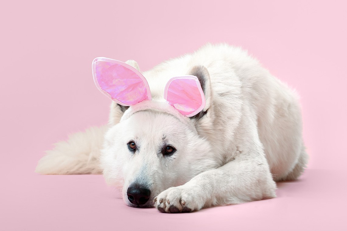 Easter Ideas For Dogs 5 Fun Activities