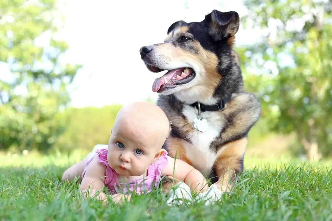German Shepherd and Newborn Baby - How To Prepare