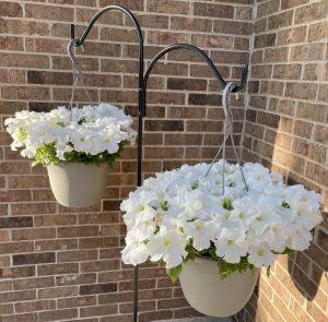 Hanging Basket Petunias