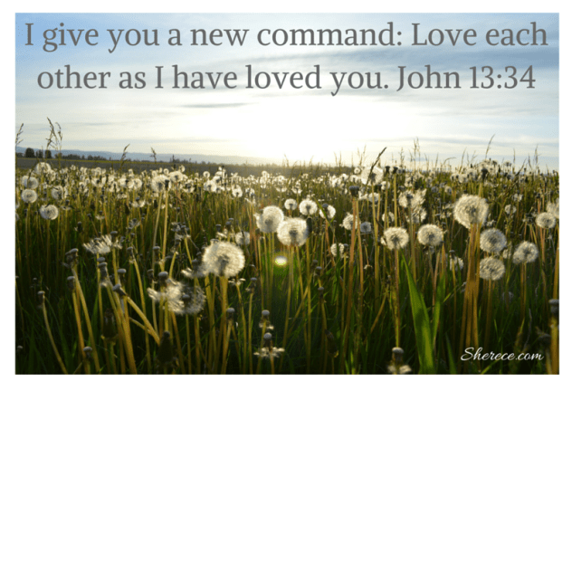 I give you a new command_ Love each other as I have loved you._ John 13_34