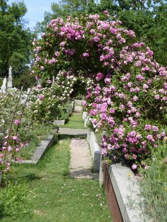 Easter in the Rose Garden 099