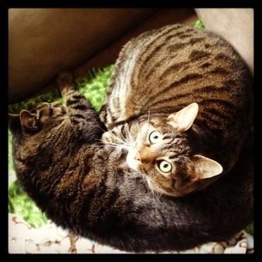 kitty cuddlefest