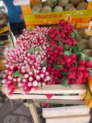 radishes in St Cyprien