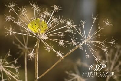 Aspen Catcher | Sheri Frazier Photography