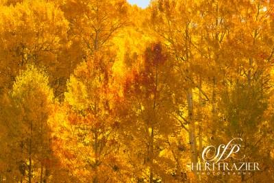 Kebler Pass Gold   Sheri Frazier Photograpahy