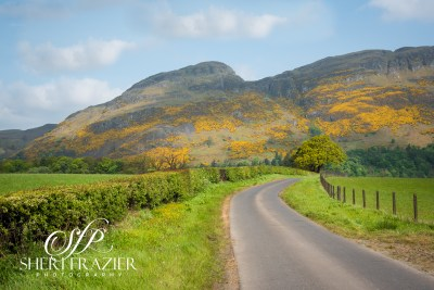 Scotland Golden Roads | Sheri Frazier Photography