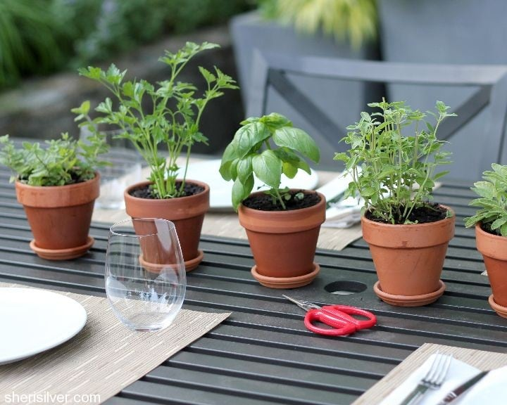 herb centerpiece diy home decor plants