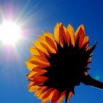 Vitamina D: Dobite dhe Efektet Anesore Te Vitamines D