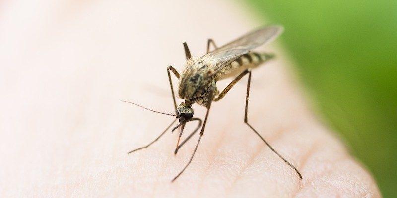 Virusi Zika: Simptomat, Rreziku, Trajtimi dhe Prandalimi