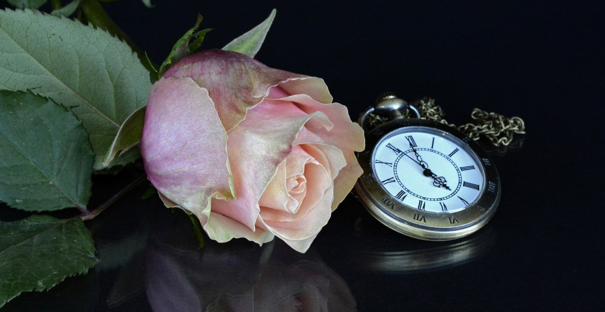all about time, timing, time, pocket watch, watch, rose