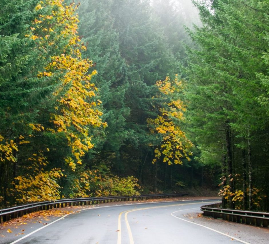 autumn in oregon, autumn, oregon, fall colors, fall, fog, forest, rain,