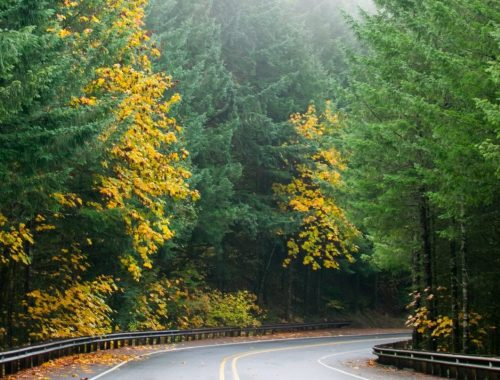 autumn in oregon, autumn, oregon, fall colors, fall, fog, forest, rain,