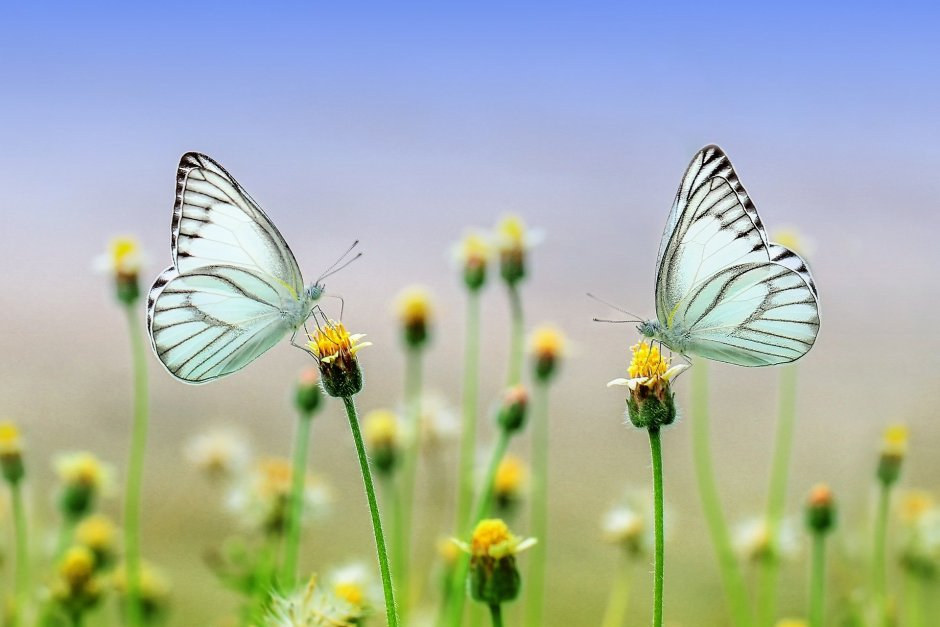 butterflies, wild flowers, blue sky, summer