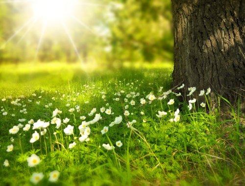 spring, freedom, meadow, tree trunk