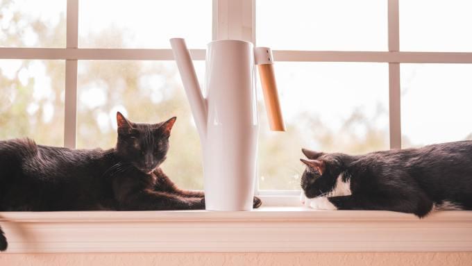 cats, bombay, tuxedo, feline personalities