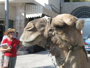 """Michael Jackson"" the camel in Bethlehem"
