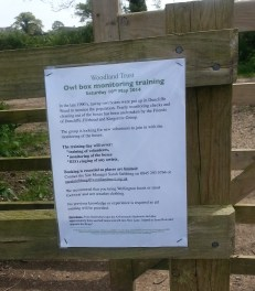 Duncliffe Bluebell Woods May 2014 (2)