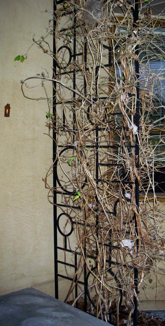 Garden Iron Decor