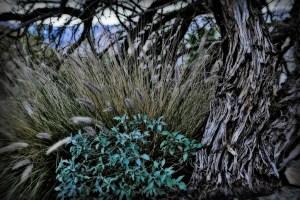 Palm Springs Foliage, January 2011