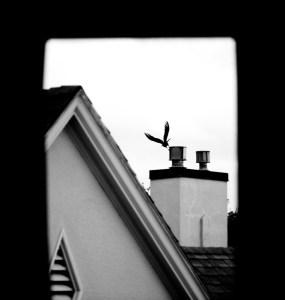Berkeley Crow, 2010