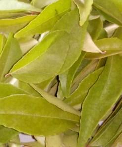 Curry Leaves - Karri Patta